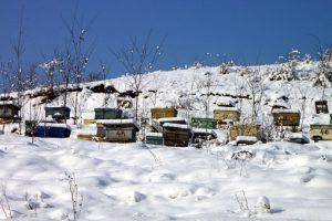 apiary-87692__340