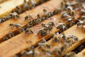 beehive-1143380_640