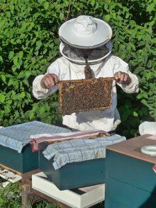 beekeeper-985082_640