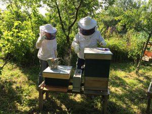 beekeepers-985084_640