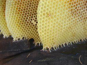 honey-1340050_640
